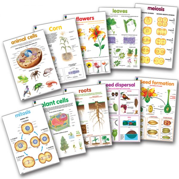 Biology wall chart posters