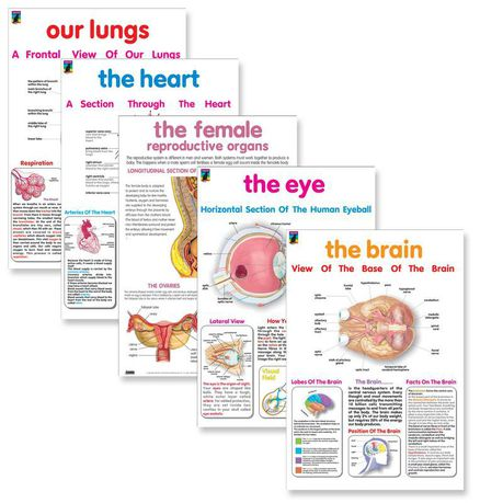 Organs of the body posters