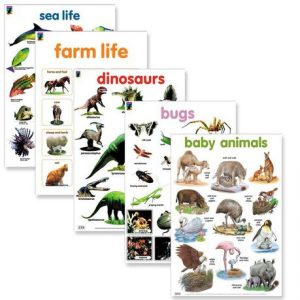 Animals basic study wall chart posters