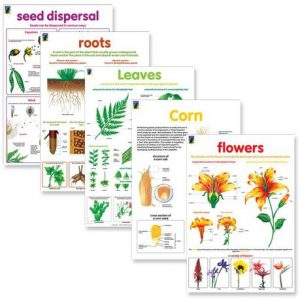 Botany resource wall chart posters