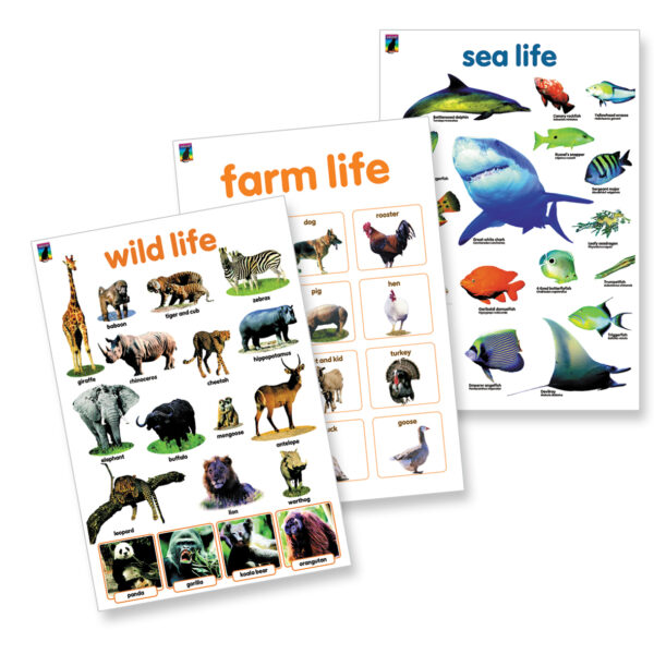 Wall Chart Poster 3 pack amazing animals